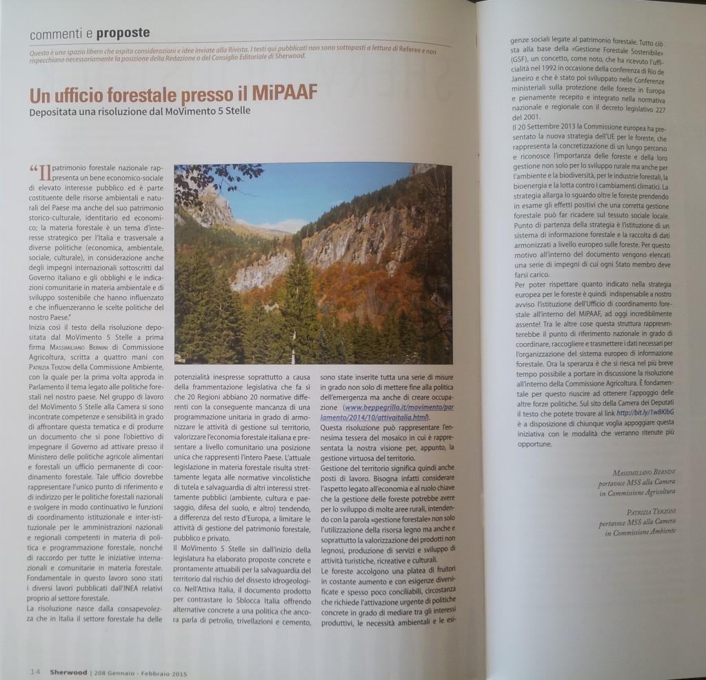 """articolo di """"Sherwood forste ed alberi oggi"""""""