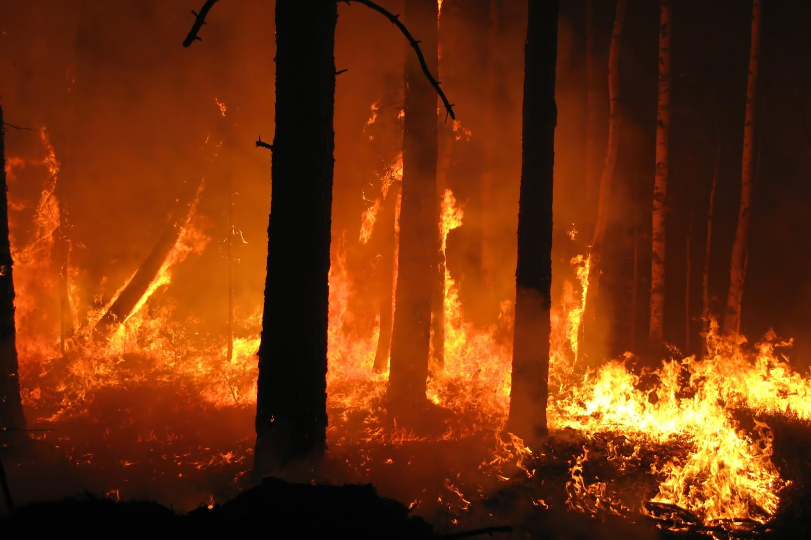 Incendi: i disastri del Dl Madia vengono a galla tutti