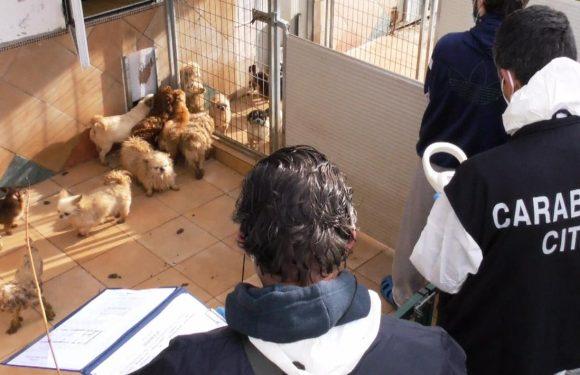 AGGIORNAMENTO Sequestro cani di Trecastelli