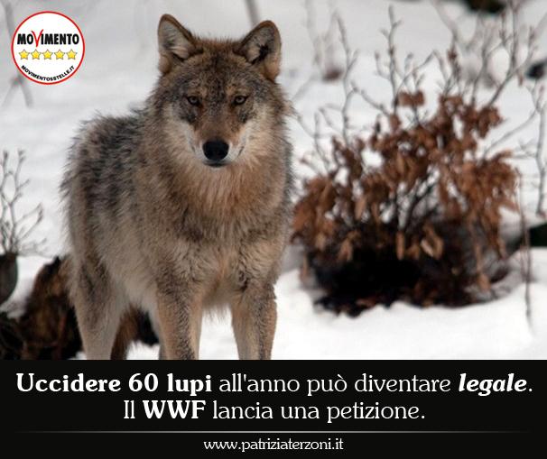 Uccidere 60 lupi all'anno può diventare legale. Il WWF lancia una petizione.