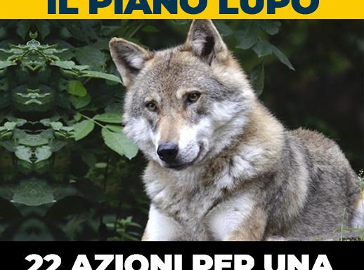 Piano Lupo, la nuova strategia per la conservazione e la gestione della specie in Italia